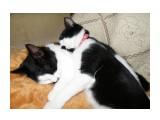 Как сладко спать на сестренке  Просмотров: 382 Комментариев: 0