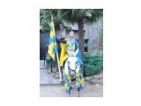 к вам рыцарь на белом коне  Просмотров: 1449 Комментариев: