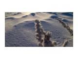 Однажды морозным утром Фотограф: vikirin  Просмотров: 1177 Комментариев: 0