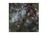 Название: F508D247-7FF1-4489-8D55-E9CF0A02079D Фотоальбом: Цветы Категория: Природа  Время съемки/редактирования: 2021:05:22 14:07:49 Фотокамера: OLYMPUS IMAGING CORP.   - E-M1             Диафрагма: f/4.8 Выдержка: 1/500 Фокусное расстояние: 75/1    Просмотров: 105 Комментариев: 0