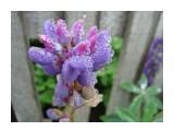 DSC00224 (3) Фотограф: Дзюба Иван цветок в росе  Просмотров: 1270 Комментариев: 0