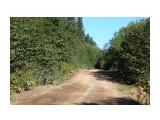 Дорога на Чамгу через перемычку Фотограф: vikirin  Просмотров: 353 Комментариев: 0
