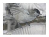 Название: PC280257 Фотоальбом: Птицы на моем окне Категория: Природа  Время съемки/редактирования: 2010:12:28 14:11:00 Фотокамера: OLYMPUS IMAGING CORP.   - FE250/X800              Диафрагма: f/4.7 Выдержка: 10/4000 Фокусное расстояние: 222/10 Светочуствительность: 64   Просмотров: 269 Комментариев: 0