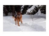 Название: IMG_5271-1 Фотоальбом: Собаки Категория: Животные  Просмотров: 808 Комментариев: 0