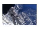 Узоры морозные... Фотограф: vikirin  Просмотров: 2701 Комментариев: 0