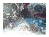 Название: Осьминог в норе Фотоальбом: Виды и добыча подводной охоты. Лето 2013г. Категория: Природа Фотограф: Тимофеев И.В.  Время съемки/редактирования: 2007:01:06 03:25:12 Фотокамера: Canon - Canon PowerShot A570 IS Диафрагма: f/2.6 Выдержка: 1/160 Фокусное расстояние: 5800/1000    Просмотров: 579 Комментариев: 0