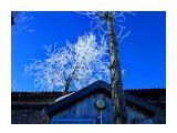 Деревья Фотограф: alexei1903  Просмотров: 1391 Комментариев: 0