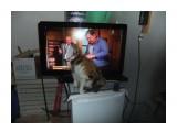мадянов ловит блох у кошки из телевизора