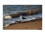О чем мечтает чайка...  Фотограф: vikirin  Просмотров: 1117 Комментариев: 0
