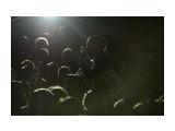 «Лондон – Париж»,  Москва – Углегорск Горячий спор по поводу того, приедет или не приедет в Углегорск известный российский певец Иракли (от рождения Ираклий Пирцхалава) возник среди людей сразу же, как только появились афиши о грядущем событии.   Просмотров: 2625 Комментариев: