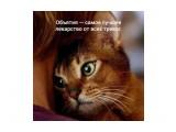 Название: Ласковое слово и котейке приятно :) Фотоальбом: Живности. Котяры Категория: Животные  Просмотров: 92 Комментариев: 1