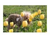 Название: тюльпаны Фотоальбом: Мелька Категория: Животные  Просмотров: 460 Комментариев: 0