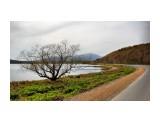 Дерево на берегу озера Тунайча  Просмотров: 478 Комментариев: