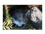 Ручей впадает в р.Набиль Фотограф: vikirin  Просмотров: 1416 Комментариев: 0
