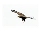 охотник Фотограф: ©  marka /печать больших фотографий,создание слайд-шоу на DVD/  Просмотров: 680 Комментариев: 0