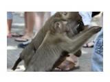 Название: IMG_6002 Фотоальбом: Phuket Категория: Туризм, путешествия  Просмотров: 359 Комментариев: 0