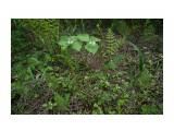 DSC05200 Фотограф: vikirin  Просмотров: 1407 Комментариев: 0