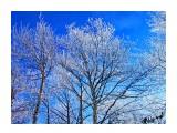 Деревья Фотограф: alexei1903  Просмотров: 1342 Комментариев: 0