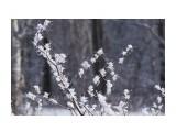 Название: _DSC5673 Фотоальбом: Зима... Категория: Природа Фотограф: VictorV  Время съемки/редактирования: 2020:12:18 20:30:52 Фотокамера: SONY - ILCA-77M2 Диафрагма: f/5.0 Выдержка: 1/2500 Фокусное расстояние: 1350/10    Просмотров: 40 Комментариев: 0