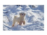 Сторожевой пёс :)))