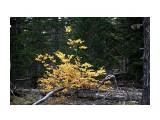 Название: Иногда в тайге вдруг - как свеча горит желтый куст.. Фотоальбом: 2010-2009 09 26 сб / 2008 10 3-4  Тэнге Категория: Природа Фотограф: vikirin  Время съемки/редактирования: 2010:10:10 12:09:07 Фотокамера: Canon - Canon EOS Kiss X3 Диафрагма: f/4.0 Выдержка: 1/40 Фокусное расстояние: 55/1 Светочуствительность: 100   Просмотров: 3245 Комментариев: 0