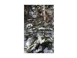 Название: IMG_4376 Фотоальбом: Зимний лес Категория: Природа Фотограф: Region_65  Время съемки/редактирования: 2012:12:01 17:16:06 Фотокамера: Canon - Canon EOS 50D Диафрагма: f/8.0 Выдержка: 1/160 Фокусное расстояние: 28/1    Просмотров: 1155 Комментариев: 0