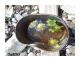 Шикотанский чай с ромашкой  Просмотров: 40 Комментариев: