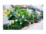 Зимний сад Фотограф: В.Дейкин  Просмотров: 1151 Комментариев: 0
