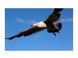 Ей летать нравится... Фотограф: vikirin  Просмотров: 1216 Комментариев: 0