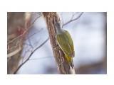 Название: _DSC4068 Фотоальбом: Птички Категория: Животные Фотограф: VictorV  Время съемки/редактирования: 2020:03:08 12:36:32 Фотокамера: SONY - DSLR-A900 Диафрагма: f/6.3 Выдержка: 1/2000 Фокусное расстояние: 6000/10    Просмотров: 236 Комментариев: 0
