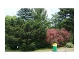 Владивосток. Ботанический сад Фотограф: vikirin  Просмотров: 537 Комментариев: 0