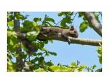 Я на солнышке лежу... )) Фотограф: VictorV  Просмотров: 404 Комментариев: 1