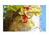 Название: DSC00426 Фотоальбом: Цветочки-ягодки  разные... Категория: Макросъёмка Фотограф: VictorV  Время съемки/редактирования: 2019:09:30 21:59:36 Фотокамера: SONY - SLT-A99 Диафрагма: f/5.6 Выдержка: 1/640 Фокусное расстояние: 1800/10    Просмотров: 162 Комментариев: 0
