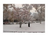 снег  Просмотров: 110 Комментариев: 0