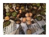 Сахалинские грецкие орехи