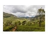 Название: Чайные плантации Фотоальбом: Шри-Ланка Категория: Туризм, путешествия  Просмотров: 350 Комментариев: 0