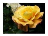 Название: DSC07432_н Фотоальбом: Розы в сквере музея Категория: Цветы  Время съемки/редактирования: 2016:07:29 14:14:42 Фотокамера: SONY - DSC-HX300 Диафрагма: f/6.3 Выдержка: 1/250 Фокусное расстояние: 21500/100    Просмотров: 37 Комментариев: 0