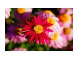 DSC01398_новый размер Фотограф: В.Дейкин  Просмотров: 1093 Комментариев: 0