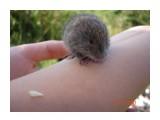 зверь-убийца! страшнее разгневанного мыша зверя нет!  Просмотров: 1498 Комментариев: