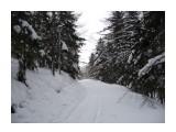 Зимний лес. Фотограф: viktorb  Просмотров: 921 Комментариев: 0