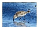 Название: DSC05565_н Фотоальбом: Птицы Категория: Животные  Время съемки/редактирования: 2021:09:14 18:54:27 Фотокамера: SONY - DSC-HX300 Диафрагма: f/6.3 Выдержка: 1/250 Фокусное расстояние: 21500/100    Просмотров: 33 Комментариев: 0
