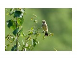 Название: _DSC9956 1 Фотоальбом: Птички Категория: Животные Фотограф: VictorV  Время съемки/редактирования: 2021:07:14 22:05:55 Фотокамера: SONY - ILCA-77M2 Диафрагма: f/6.3 Выдержка: 1/800 Фокусное расстояние: 4000/10    Просмотров: 26 Комментариев: 0