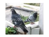Название: подкидыш Фотоальбом: мой птичник на балконе Категория: Животные  Время съемки/редактирования: 2011:09:12 08:10:03 Фотокамера: OLYMPUS IMAGING CORP.   - SP570UZ                 Диафрагма: f/4.0 Выдержка: 10/500 Фокусное расстояние: 1674/100 Светочуствительность: 100  Описание: Что по меньше, птенец, который сам поселился на балконе  Просмотров: 783 Комментариев: 0