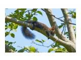 Обнимая дерево ) Фотограф: VictorV  Просмотров: 347 Комментариев: 4