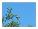 Название: IMG_1811 Фотоальбом: Разное Категория: Природа  Время съемки/редактирования: 2013:07:05 18:31:34 Фотокамера: Canon - Canon PowerShot A495 Диафрагма: f/5.8 Выдержка: 1/320 Фокусное расстояние: 21600/1000    Просмотров: 341 Комментариев: 0