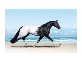 Название: Лошадь породы Аппалуза. Фотоальбом: Живности-2 Категория: Животные  Просмотров: 114 Комментариев: 0
