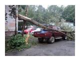 дерево упало утром 16 08 13г увидели упавшее дерево  Просмотров: 809 Комментариев: 0