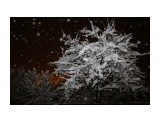 И на Кубань пришла зима Фотограф: gadzila  Просмотров: 539 Комментариев: 0