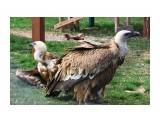 Название: IMG_7774 Фотоальбом: сафари-парк львов(крым) Категория: Животные  Просмотров: 1137 Комментариев: 0