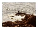 Море,солнце, двое, третий лишний. Весна однако! Фотограф: Фотохроник  Просмотров: 1910 Комментариев: 0